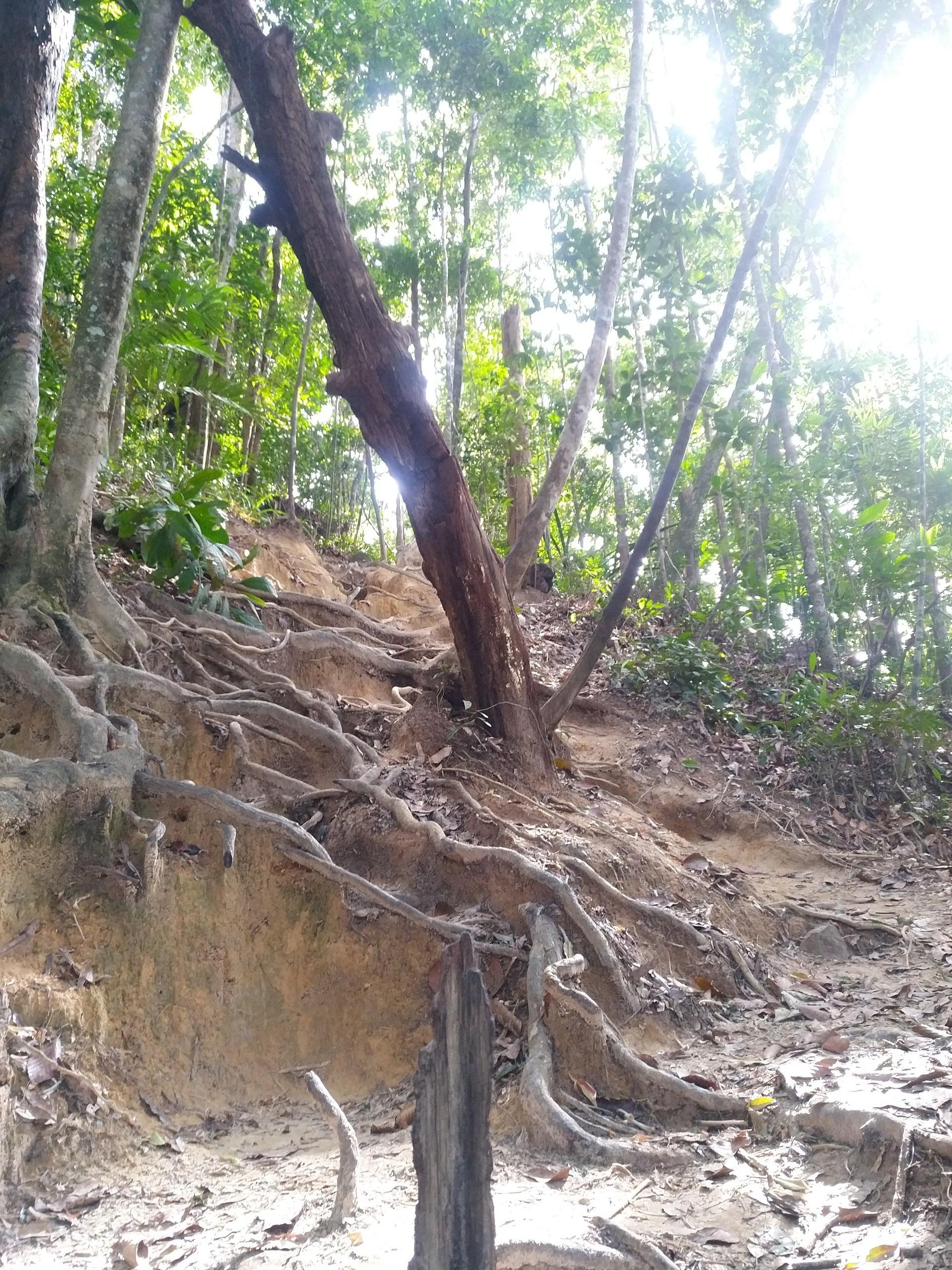 hiking-dragon-crest-mountain-trail-ff6bb