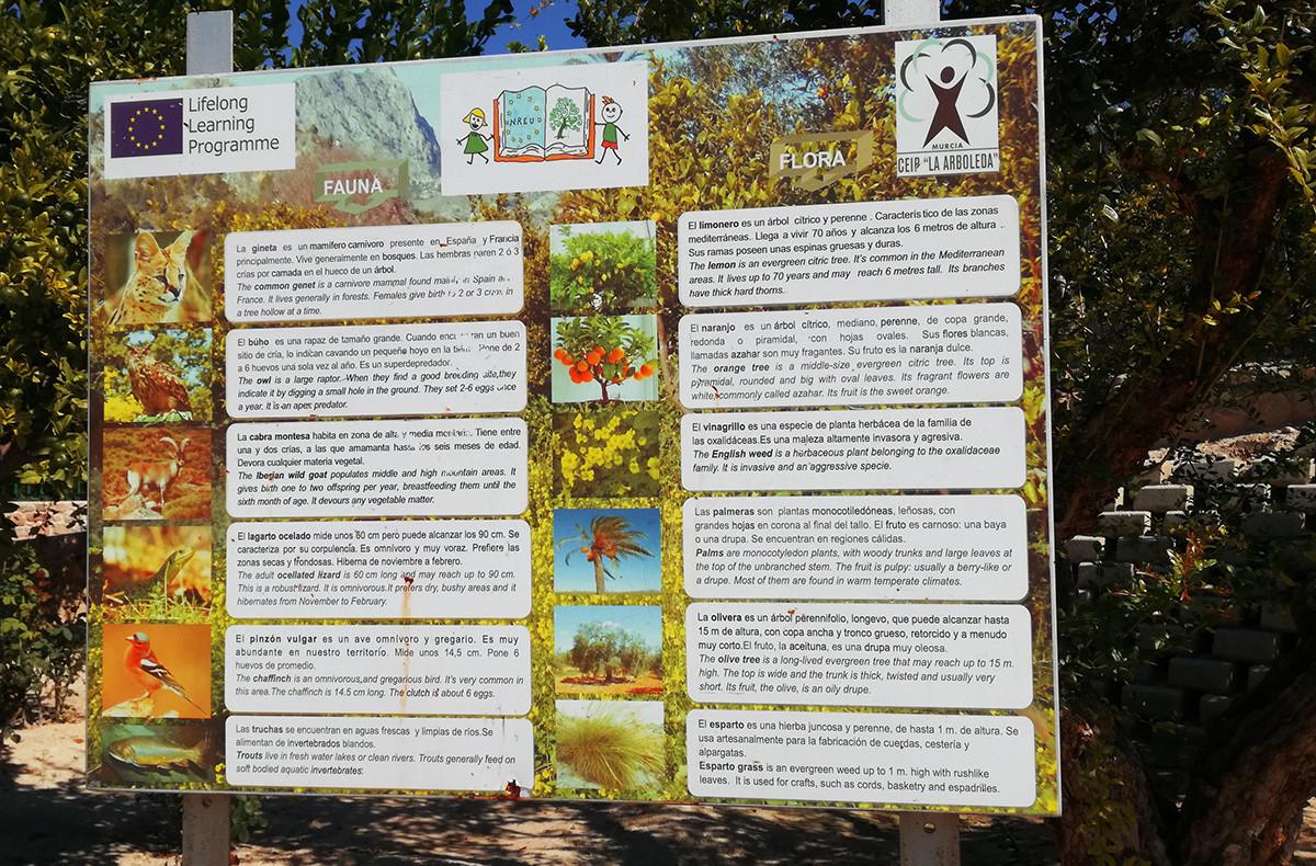 Il percorso delle ruote dei mulini di Abarán (Las Norias)