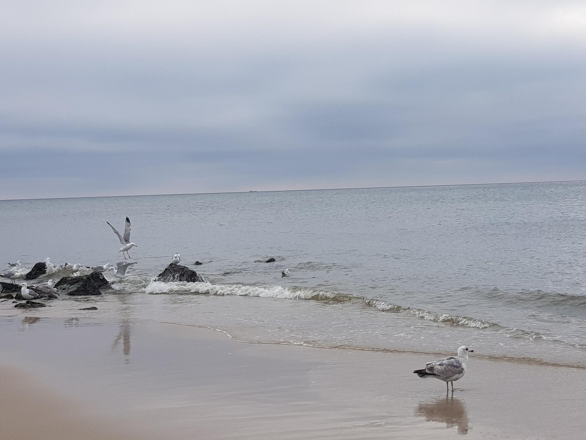In Deutschland gibt es Inseln? - Die Nordseeinsel Sylt