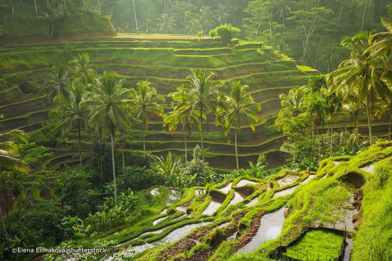 indonesian-experience-ubud-5-4a0381f69f6