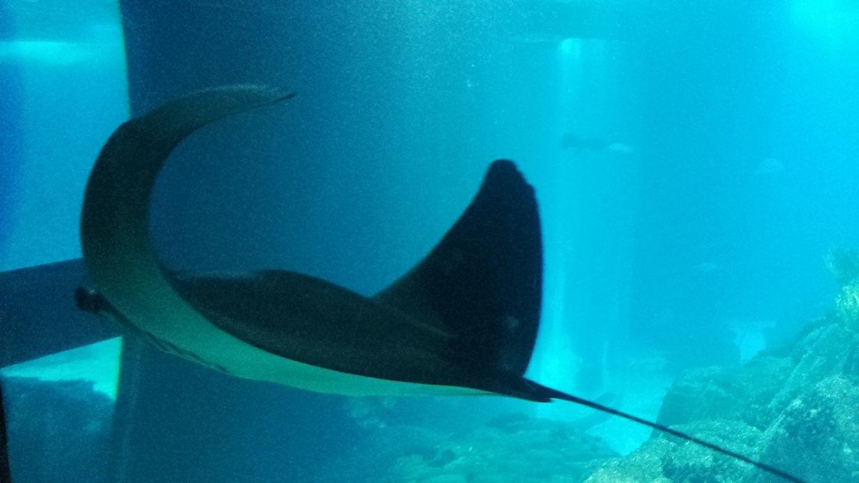 jardim-zoologico-lisboa-oceanarium-2976e