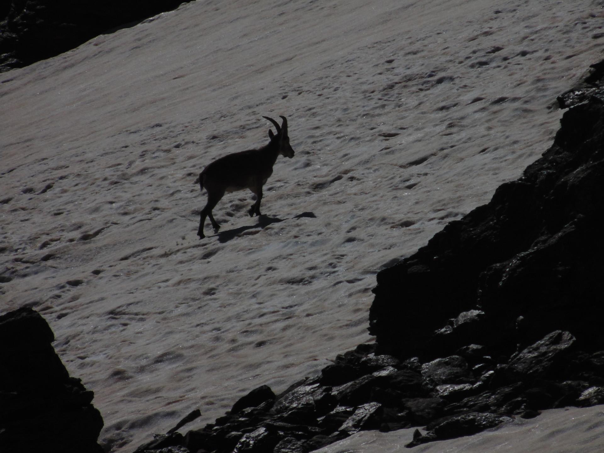 la-faune-de-sierra-nevada-21f58e6f8639d6