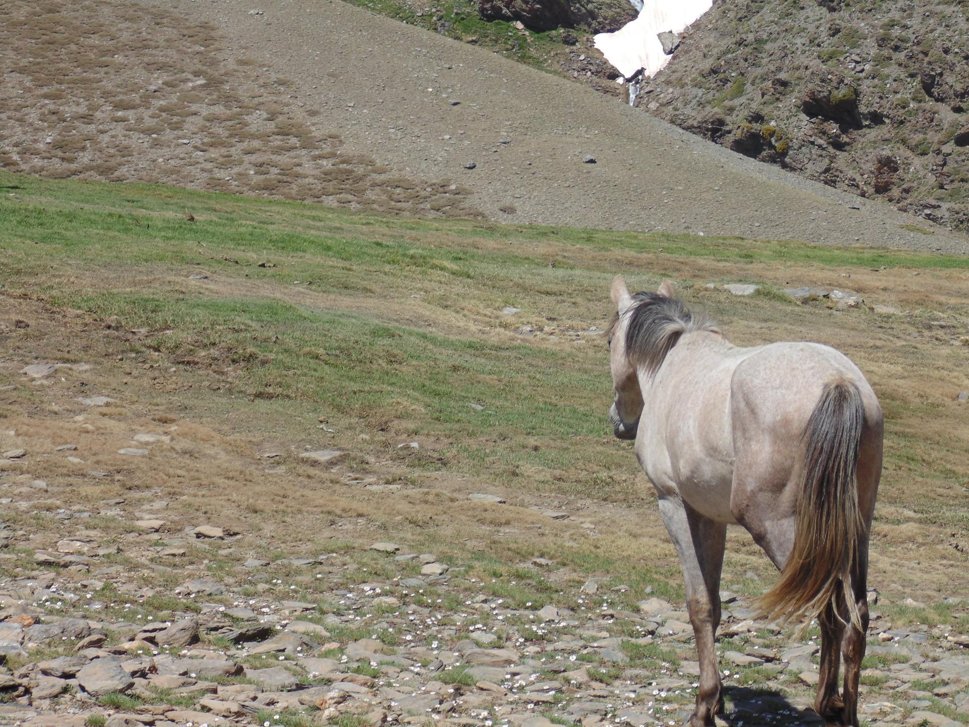 la-faune-de-sierra-nevada-490a24b32df5d7