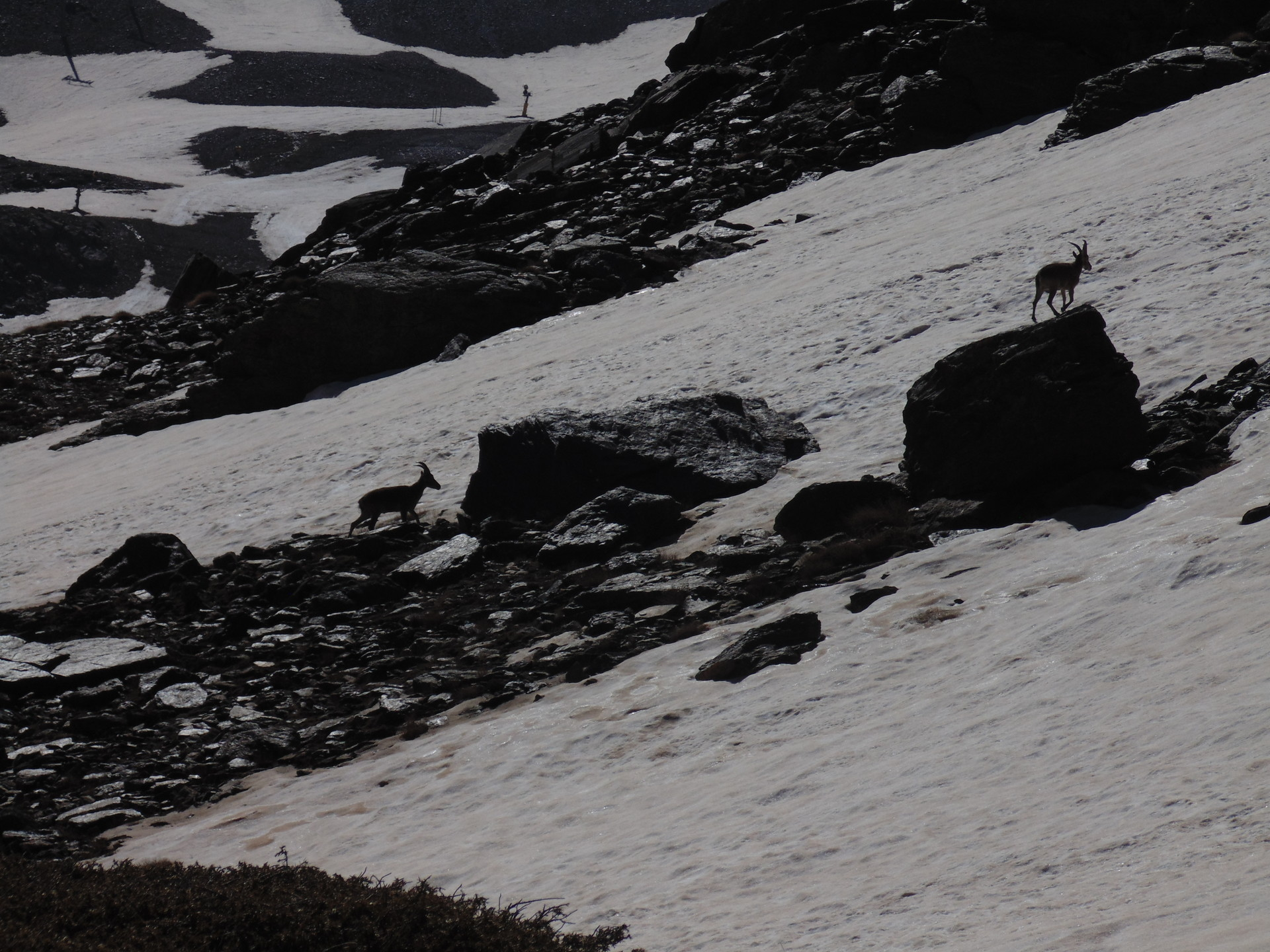 la-faune-de-sierra-nevada-c21ccaa9e5c872