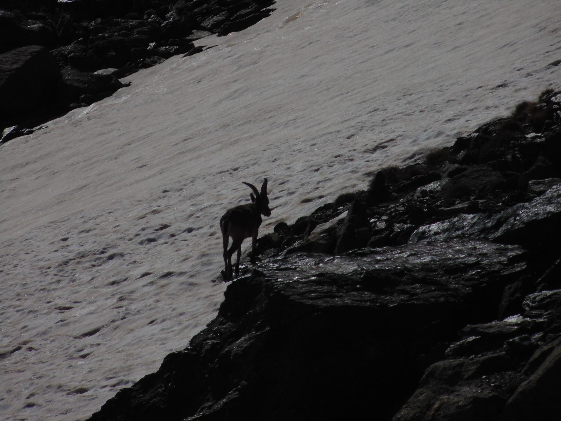 la-faune-de-sierra-nevada-cdc6b6b3f0315e