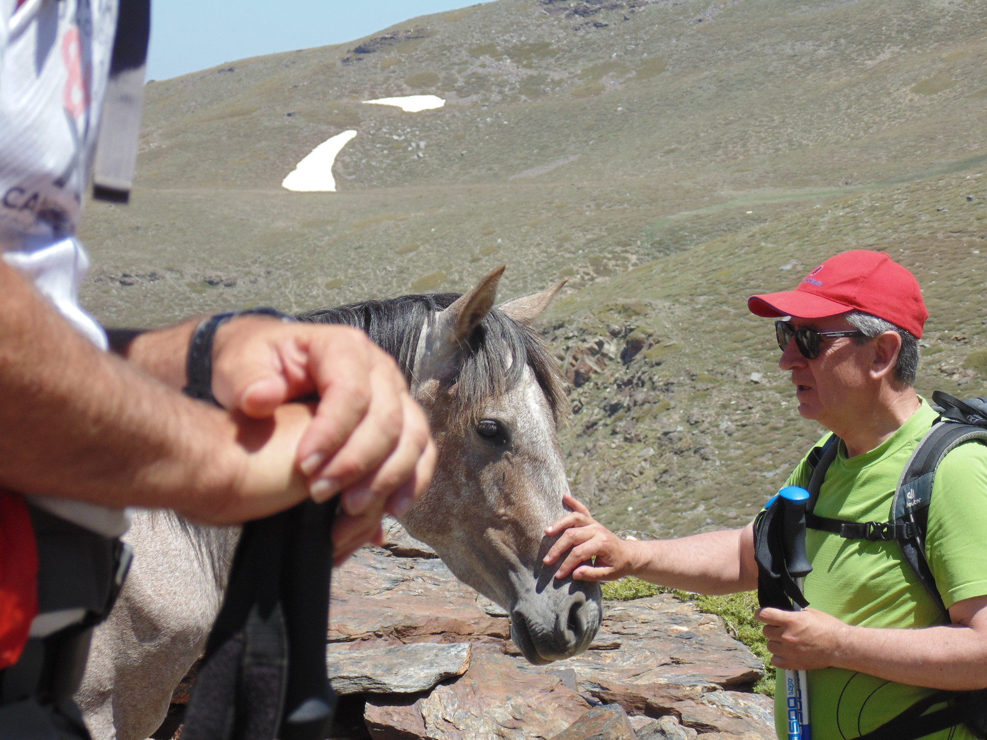 la-faune-de-sierra-nevada-f418b20d88a181