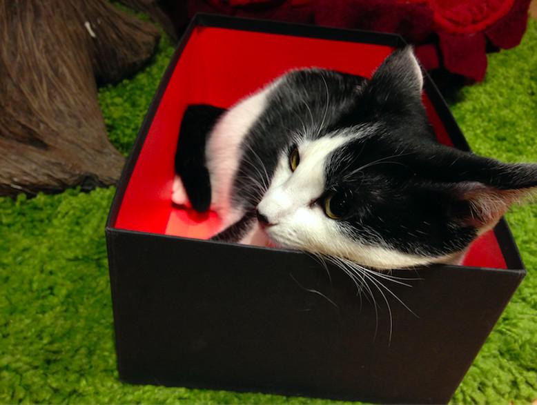 lady-dinahs-cat-emporium-248cb57f3629bd0