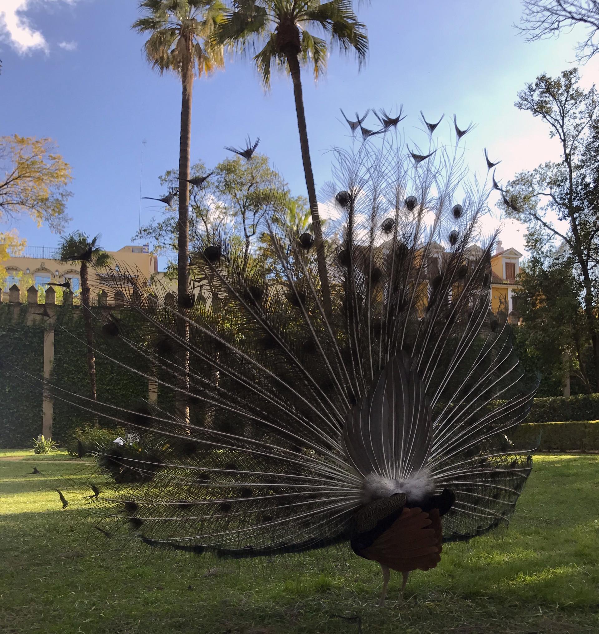 les-jardins-de-lalcazar-b2655b00e485486f