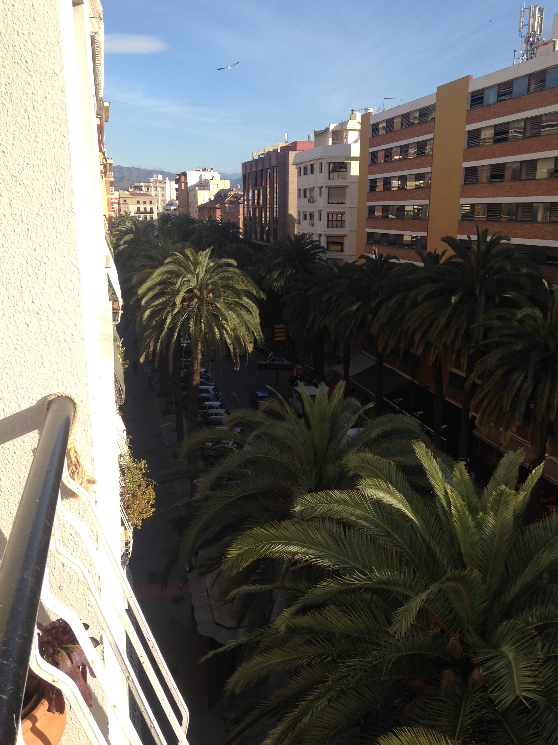 Lovely room, lovely flatmates in central Malaga