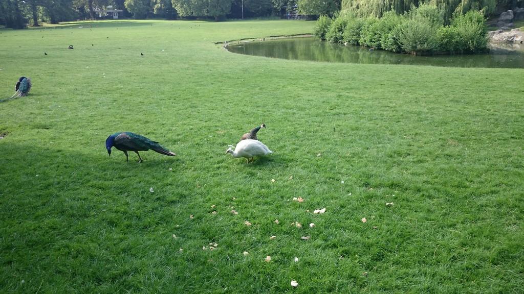 nice-park-utrecht-d84c664e333976fcd7049b