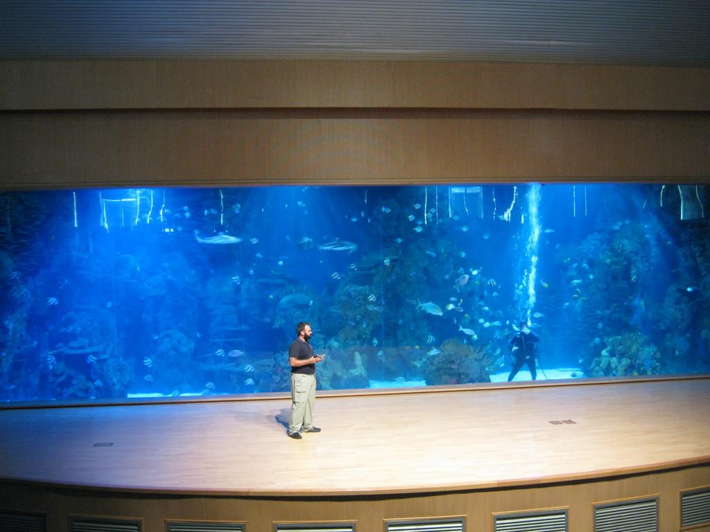 Oceanogr fic what to do in valencia for Aquarium valencia bar