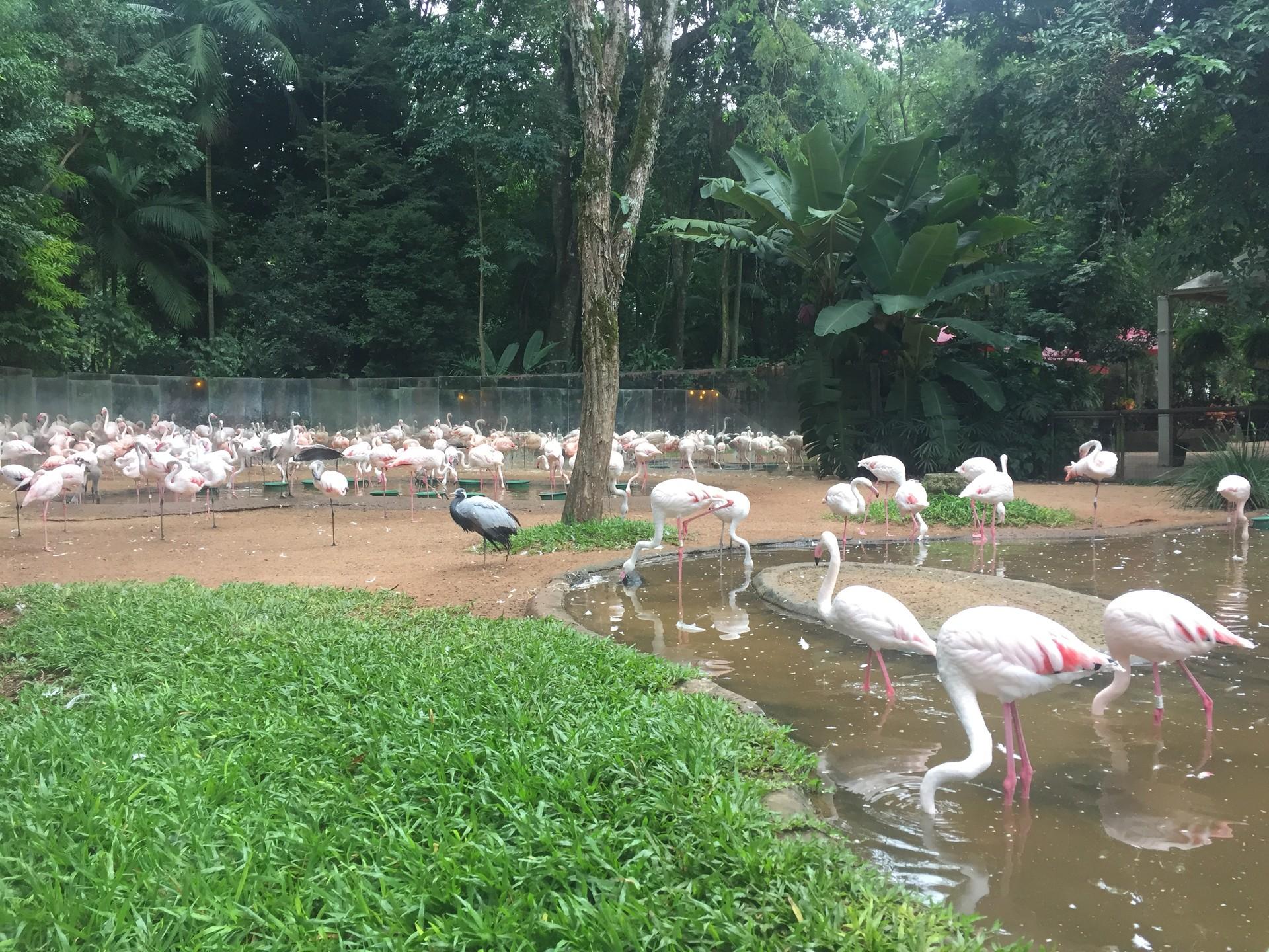 parque-aves-5ebca1e45e5d8115c66909551de5