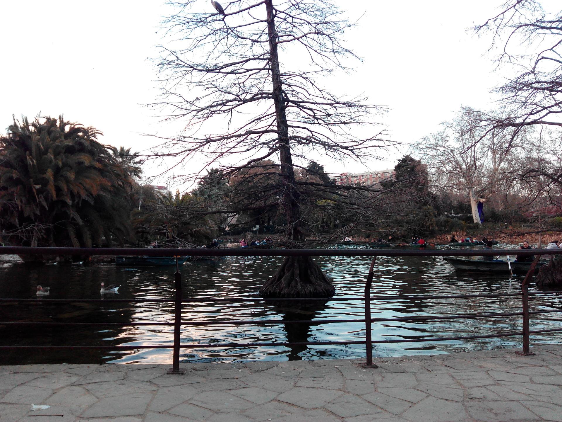 parque-ciutadella-arte-urbano-desconexio