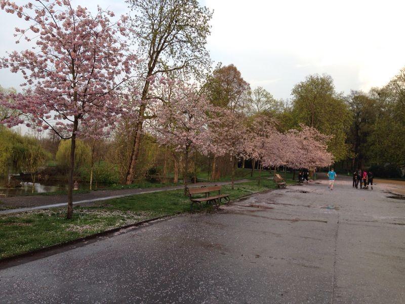 Parque Stromovka - Hogar de árboles