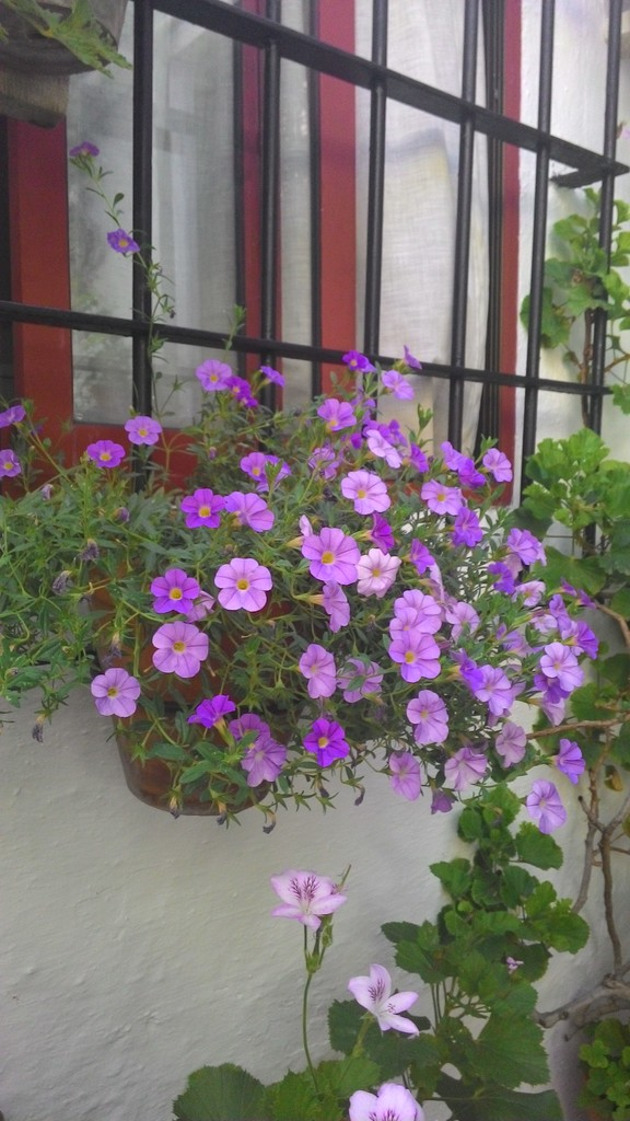 patios-festival-city-blooms-0ab7261f2421