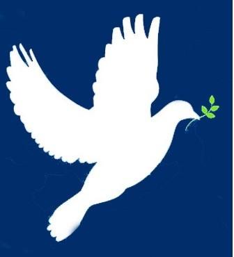 Pigeon The Symbol Of Peace Erasmus Experience Granada