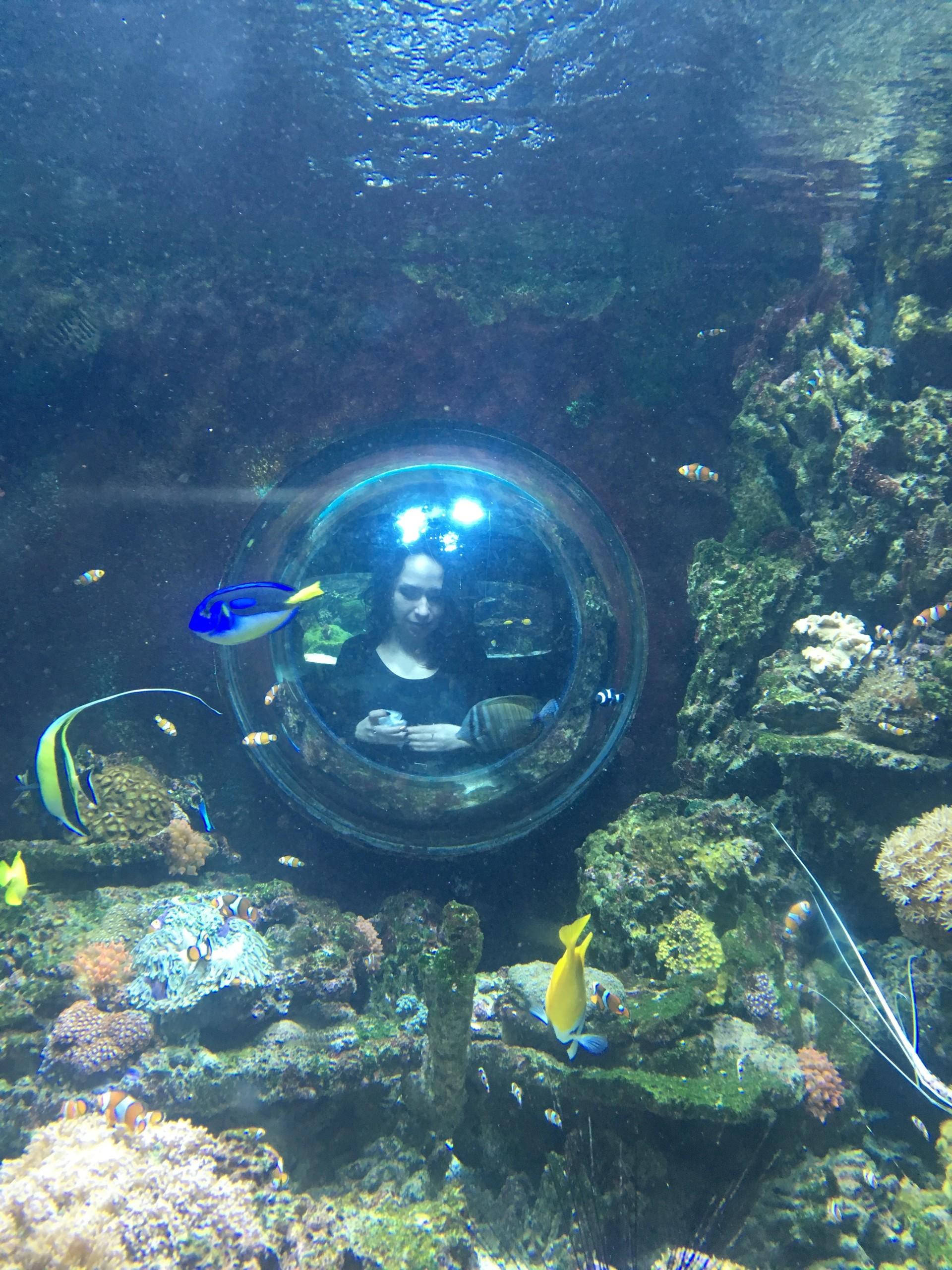 Rekiny, płaszczki i inne rybki - Tropicarium w Budapeszcie, czy warto?