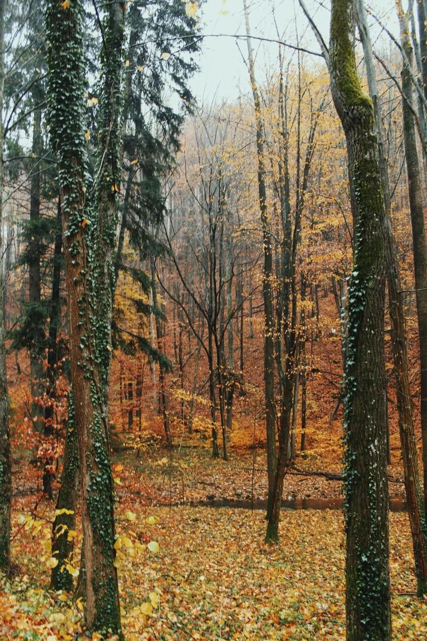 República Checa: cuevas de Punkva y Olomouc