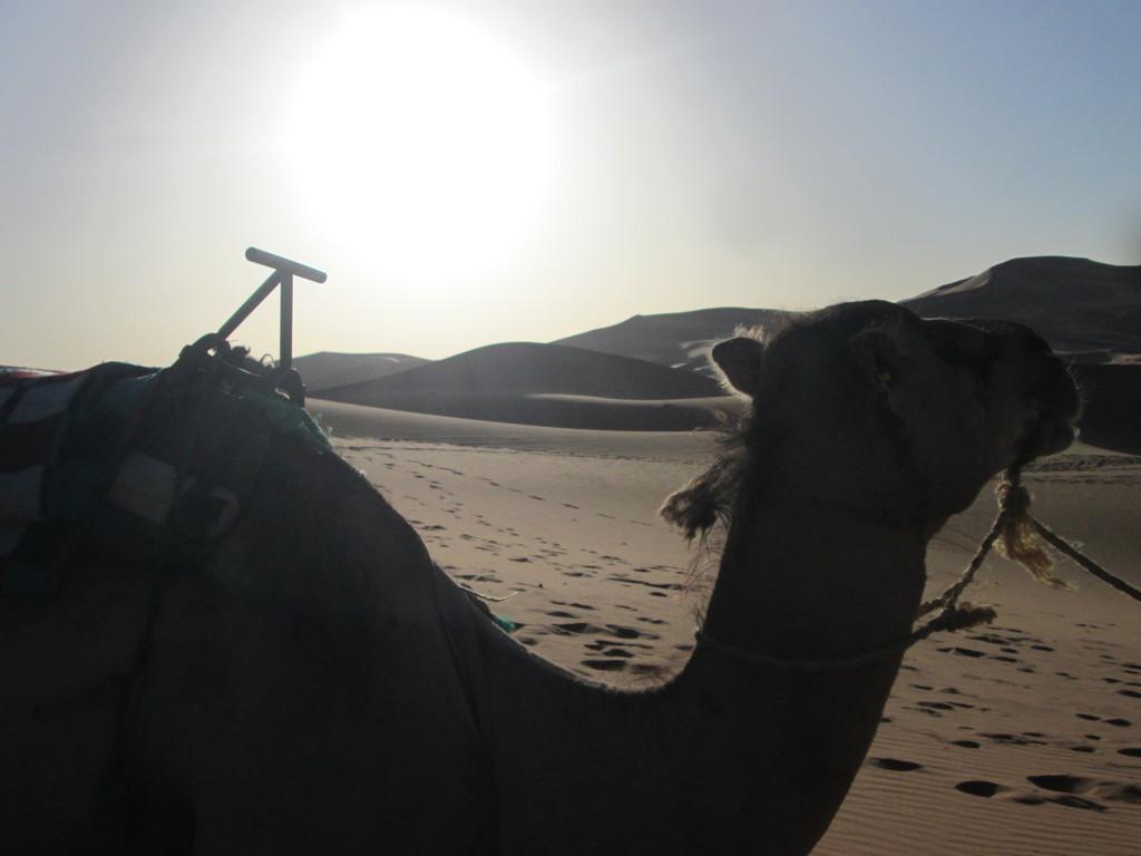 sahara-lugar-dificil-describir-260d03f07