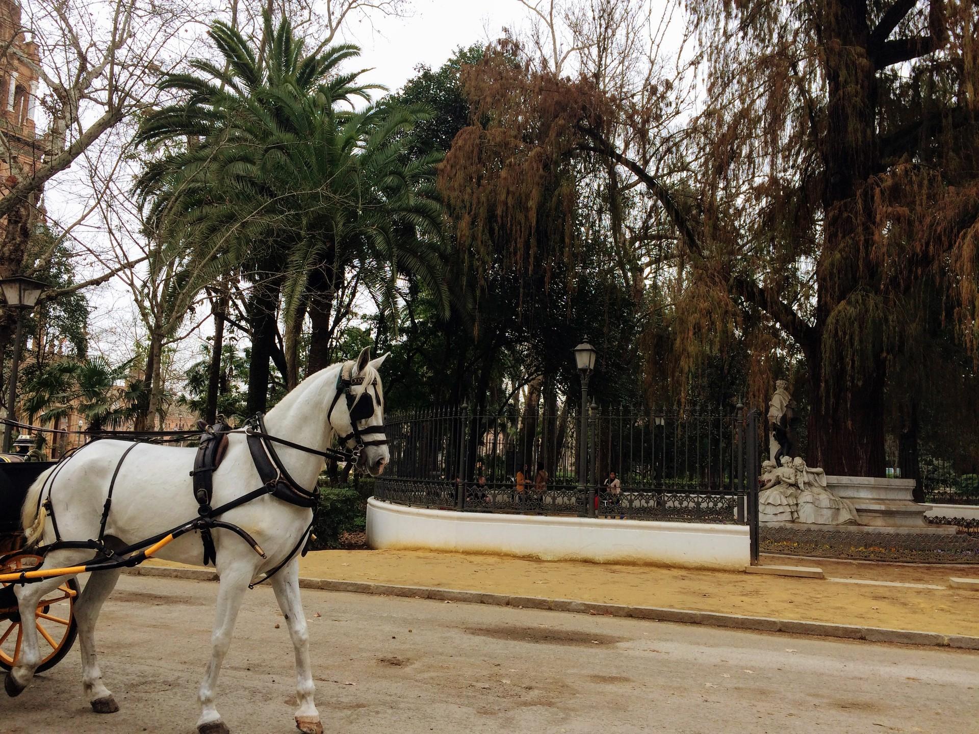 seville-winter-598cf69f020ed5cb87d552d10