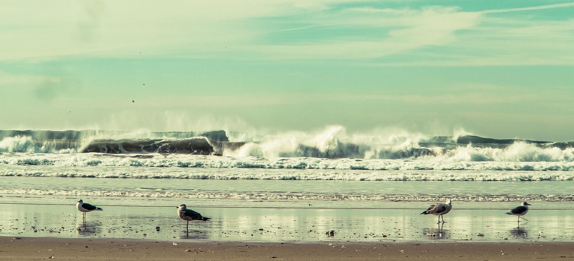 surfing-lisbon-ec355826f5929d6870ca2b20a