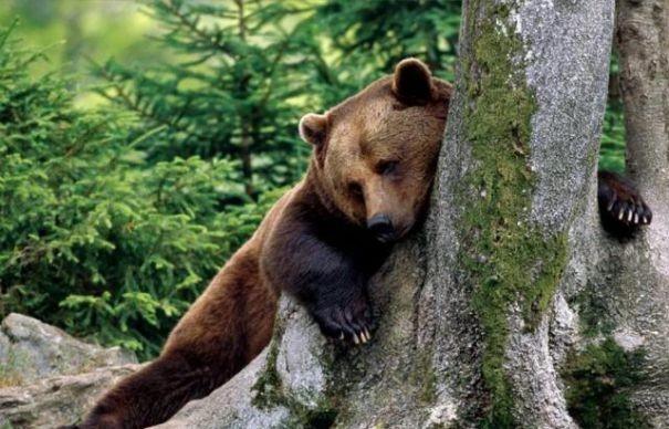 the-land-bears-37d5e2005b6237362ae7b4dd8