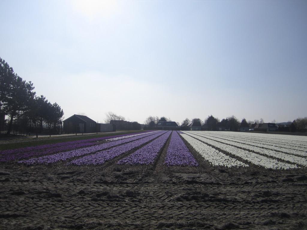 the-spring-highlight-dutch-coast-colourf