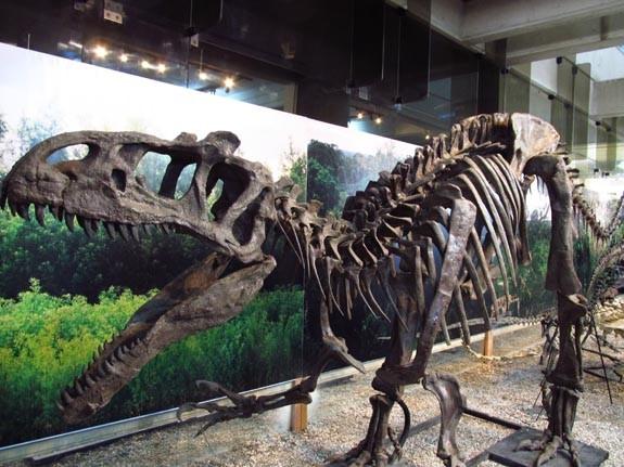 un-museo-flora-fauna-lima-26b2ca810bc840