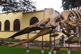 un-museo-flora-fauna-lima-75aa6efcdb045a