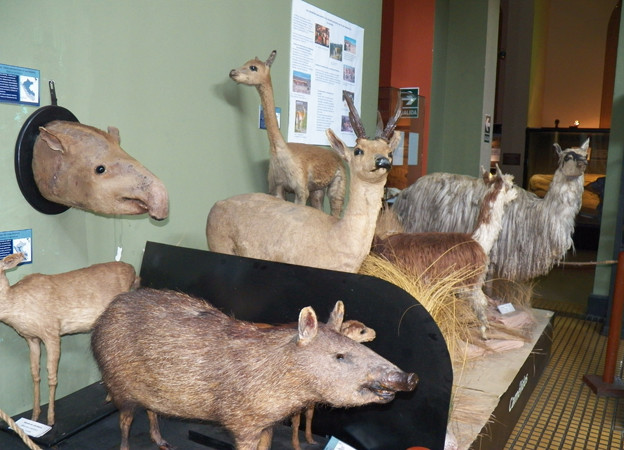 un-museo-flora-fauna-lima-a481ba4ac2eee0