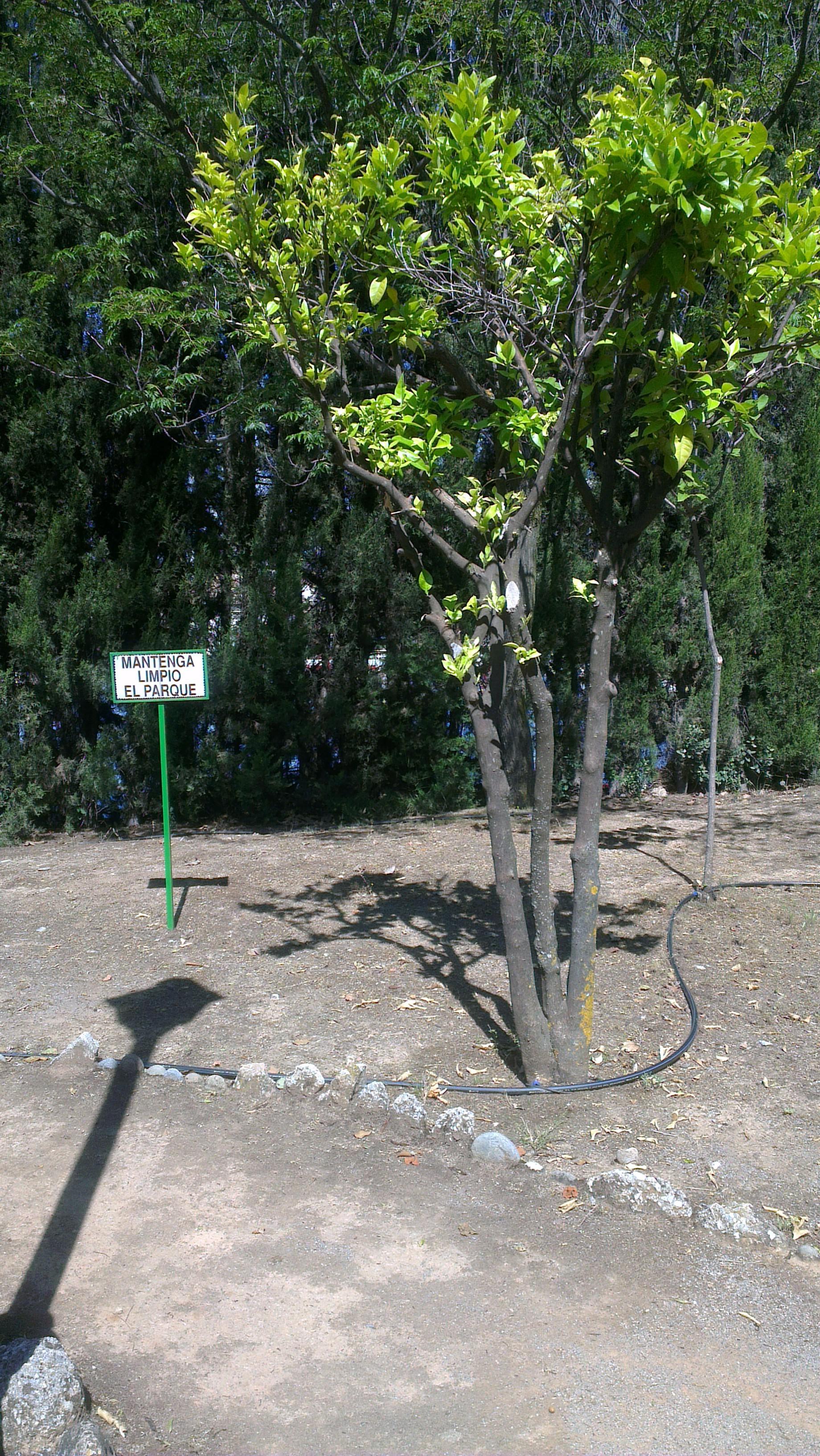 Un parque escondido y tranquilo