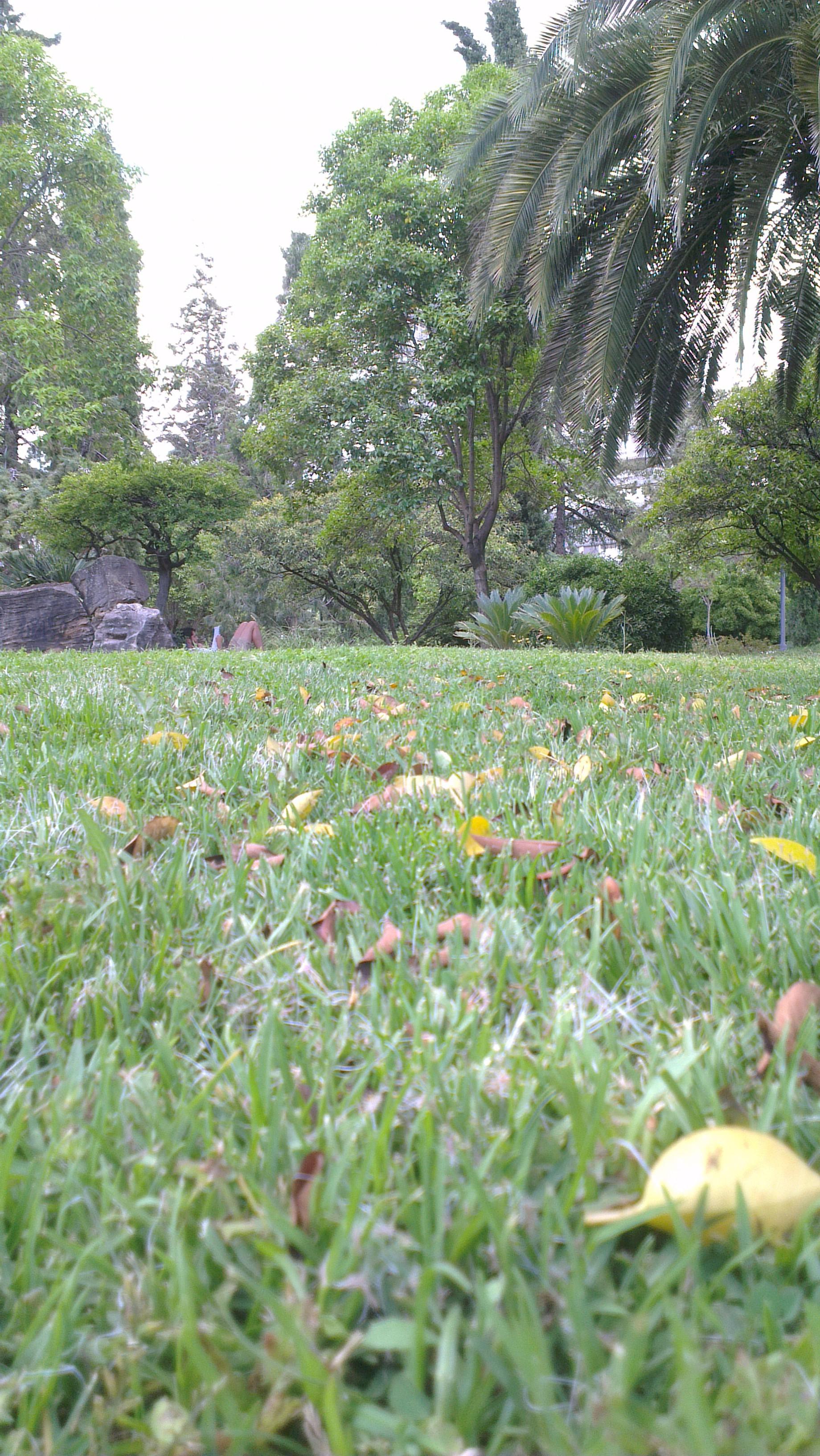 Un parque universitario para leer un libro y pasear