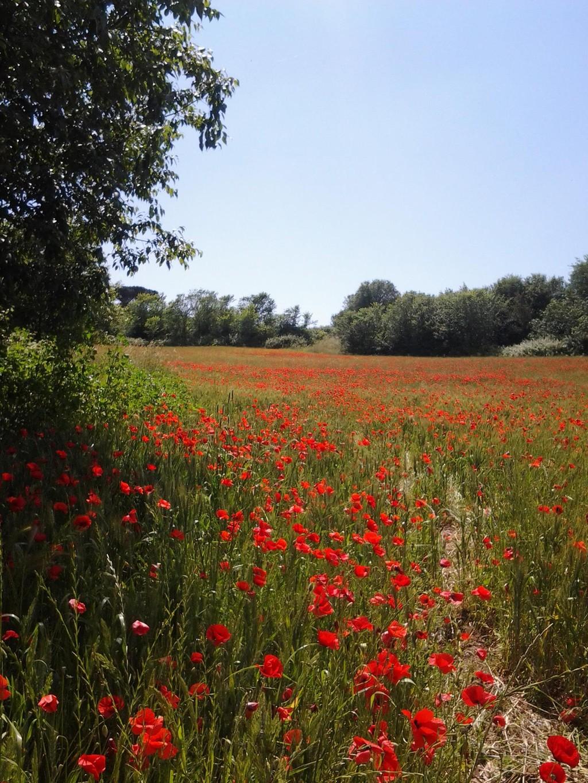 Un trozo de campo en el corazón de Roma: uno de los parques más bonitos