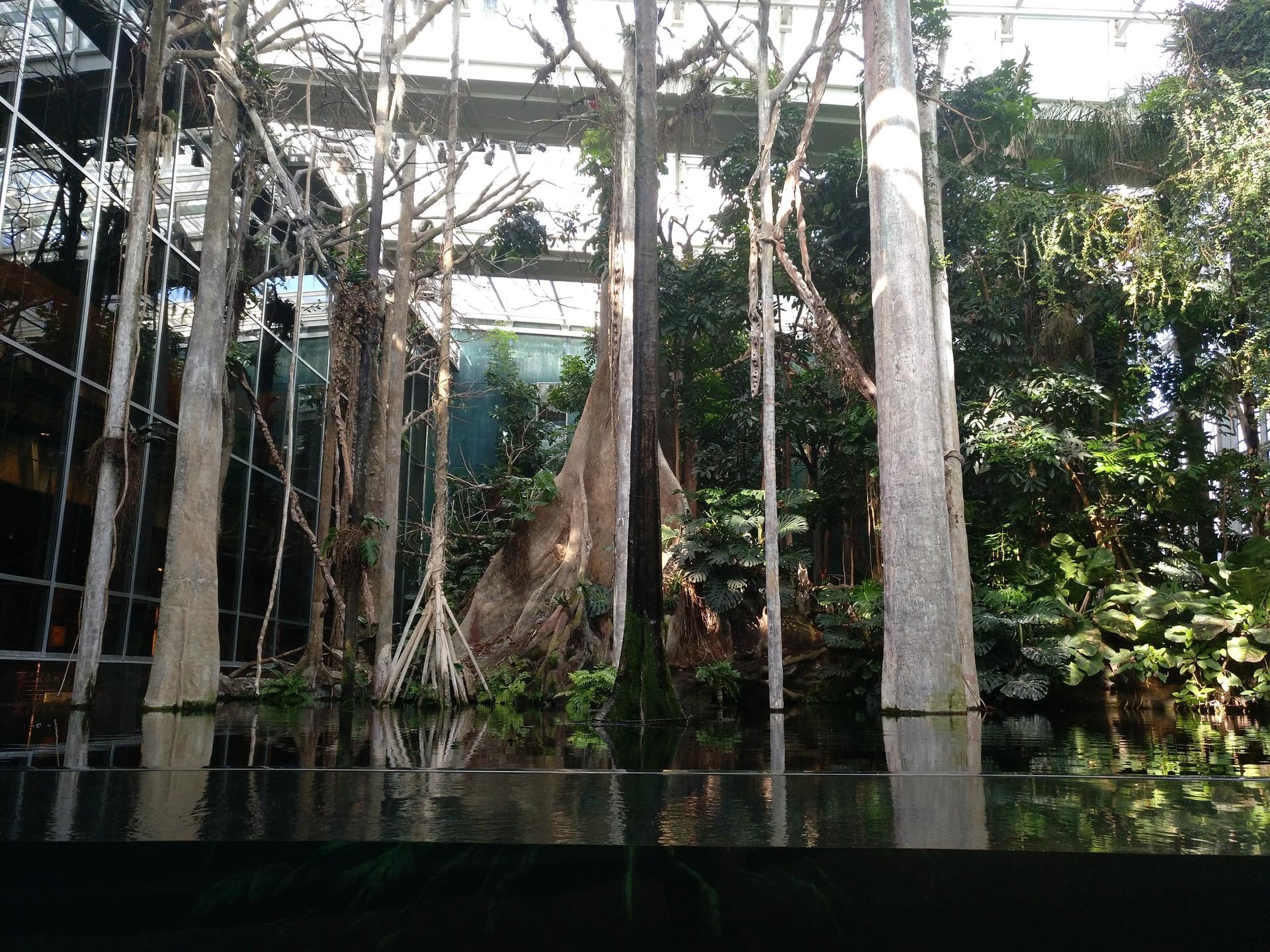 Un viaje al Amazonas.
