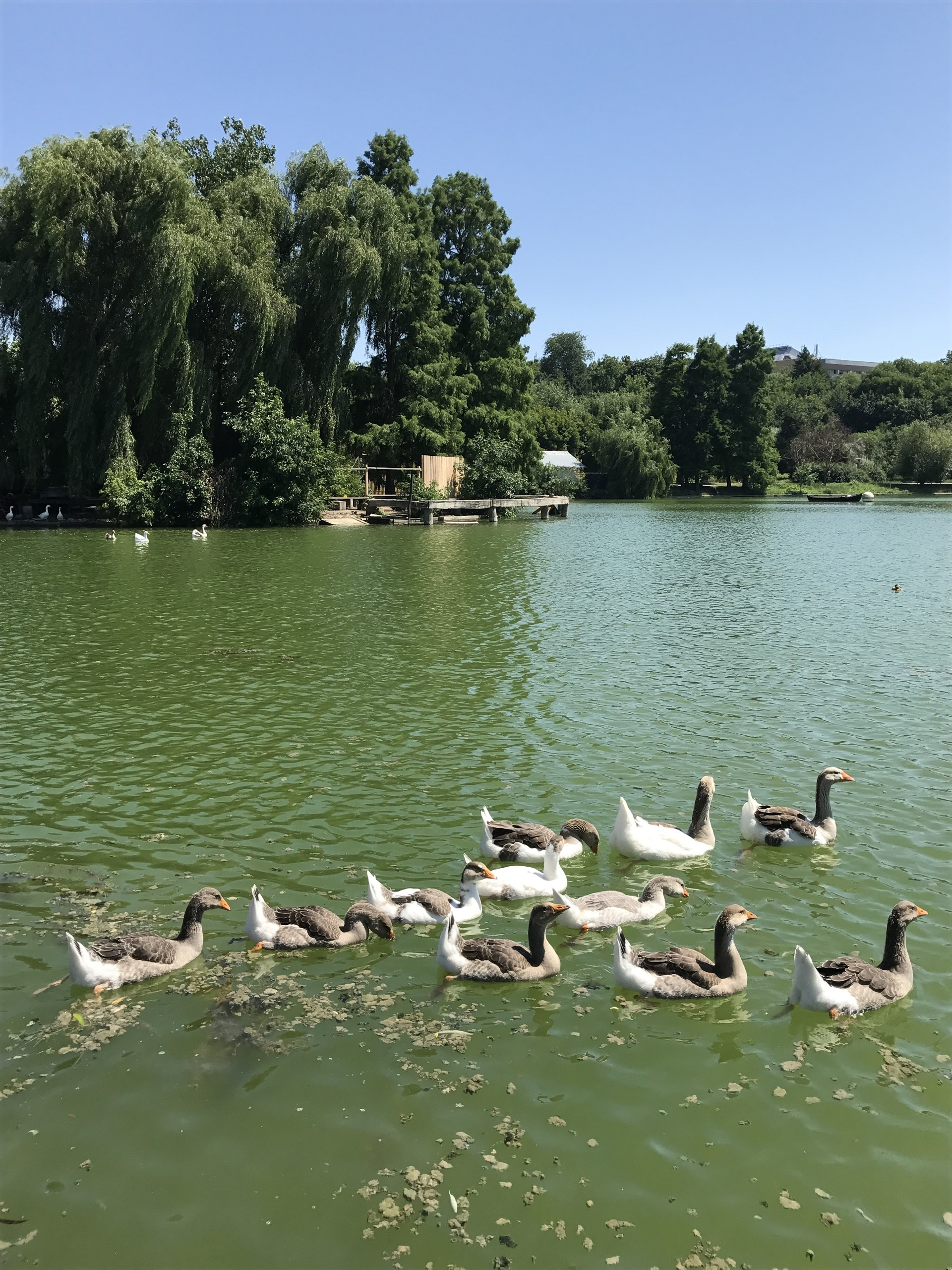 una-passeggiata-parco-tineretului-ff28e7