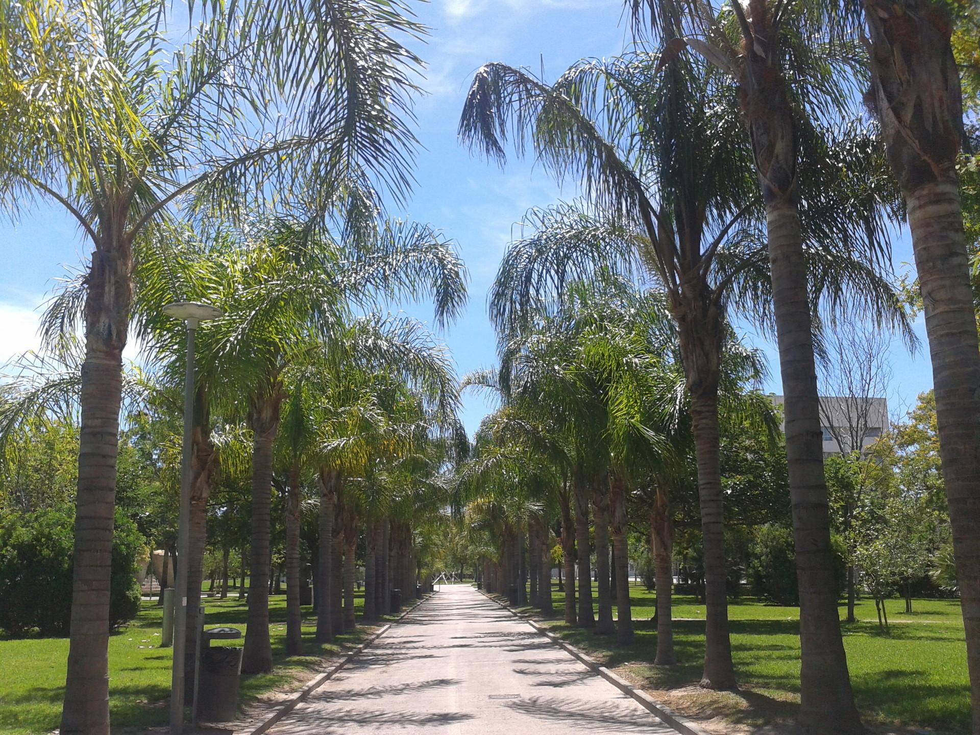 Valencia - Studiare alla UPV