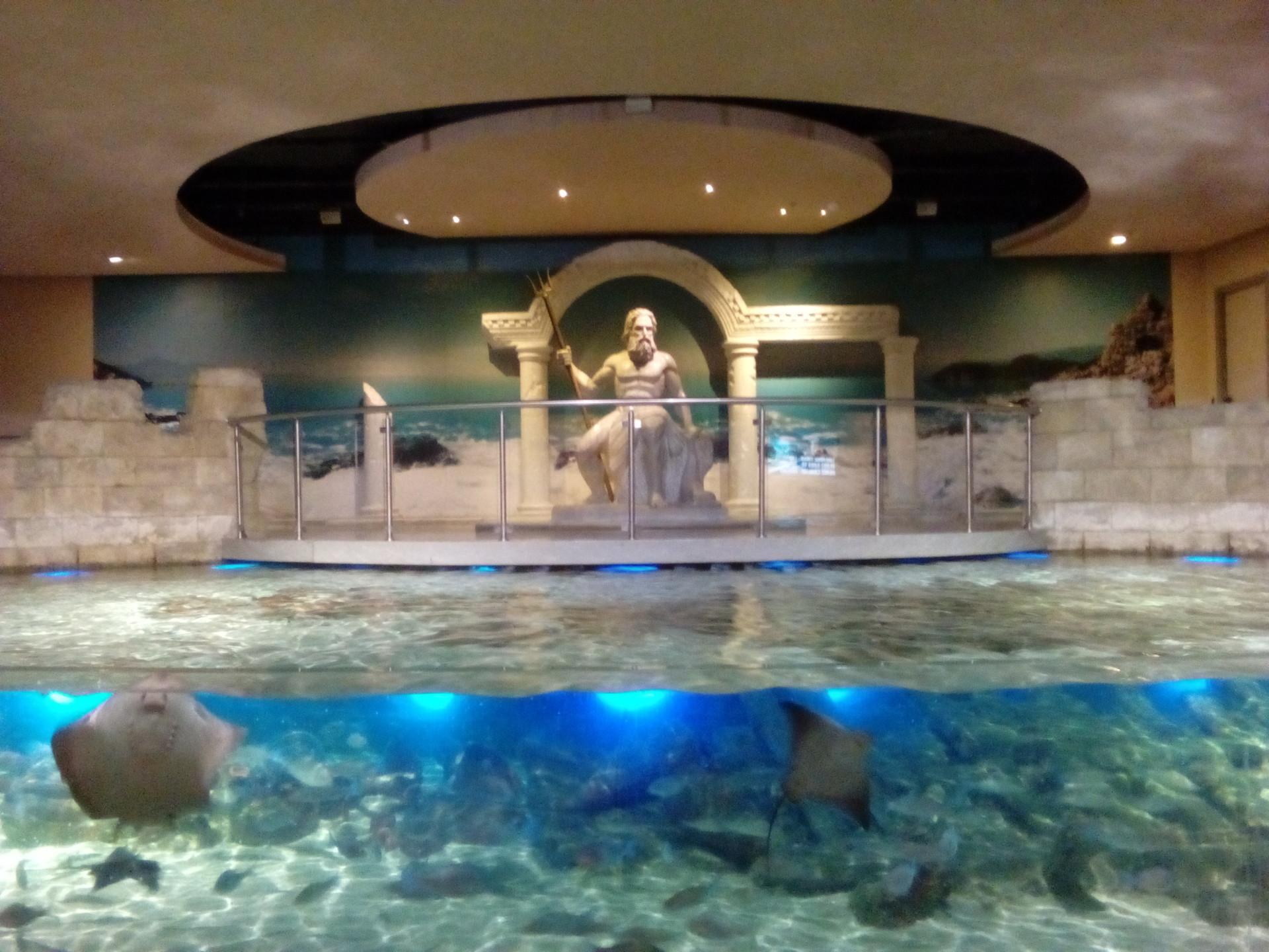¡Ven a ver la vida marina que hay bajo las aguas de Turquía en el acuario de Estambul!