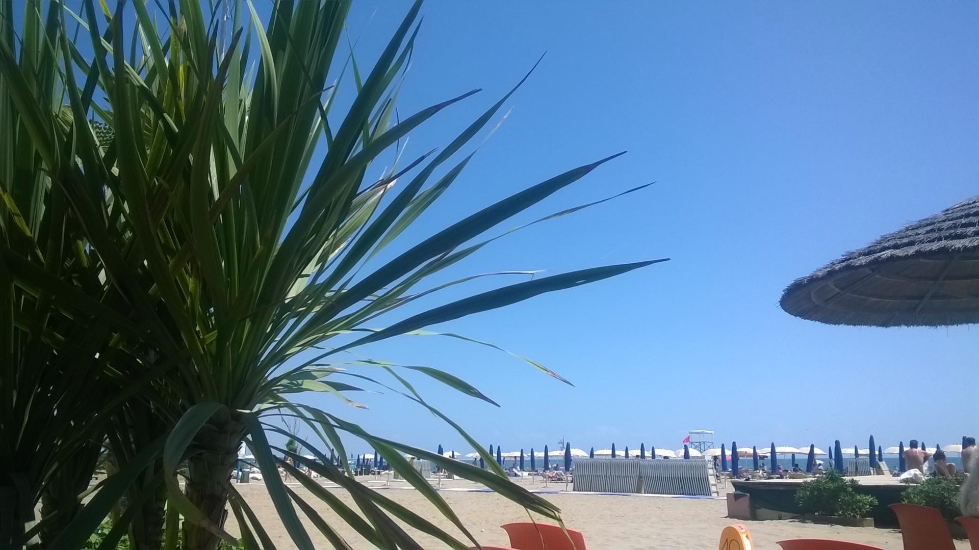 Venice's Beaches: The Lowdown