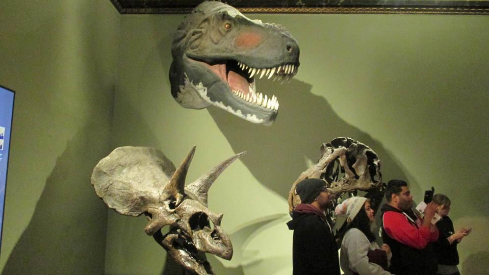 visiting-museum-natural-history-vienna-p