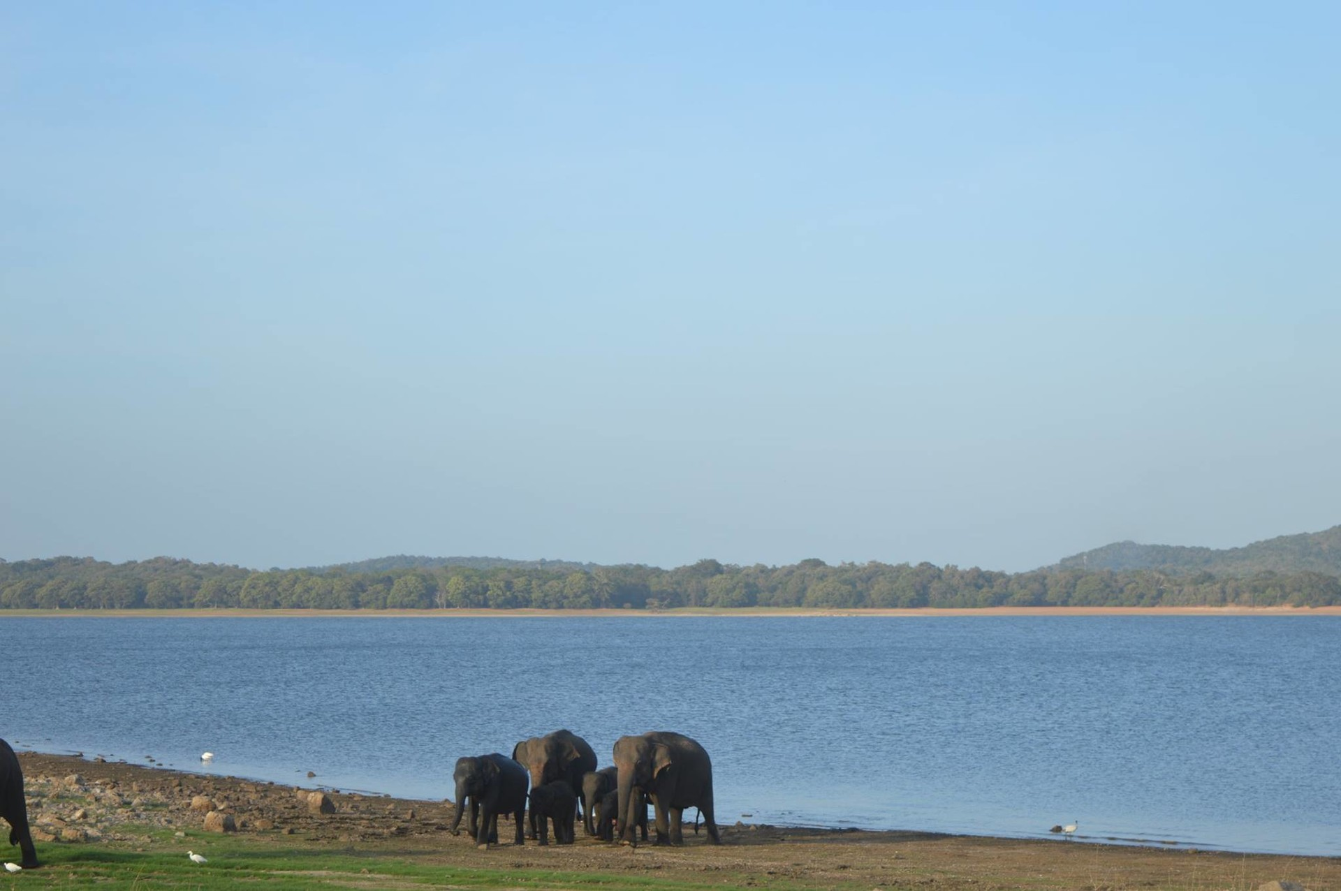 Wild safaris in Sri Lanka