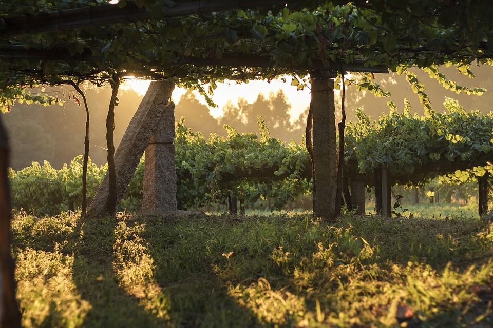 Zdrowe warak arish, czyli nadziewane liście winogron
