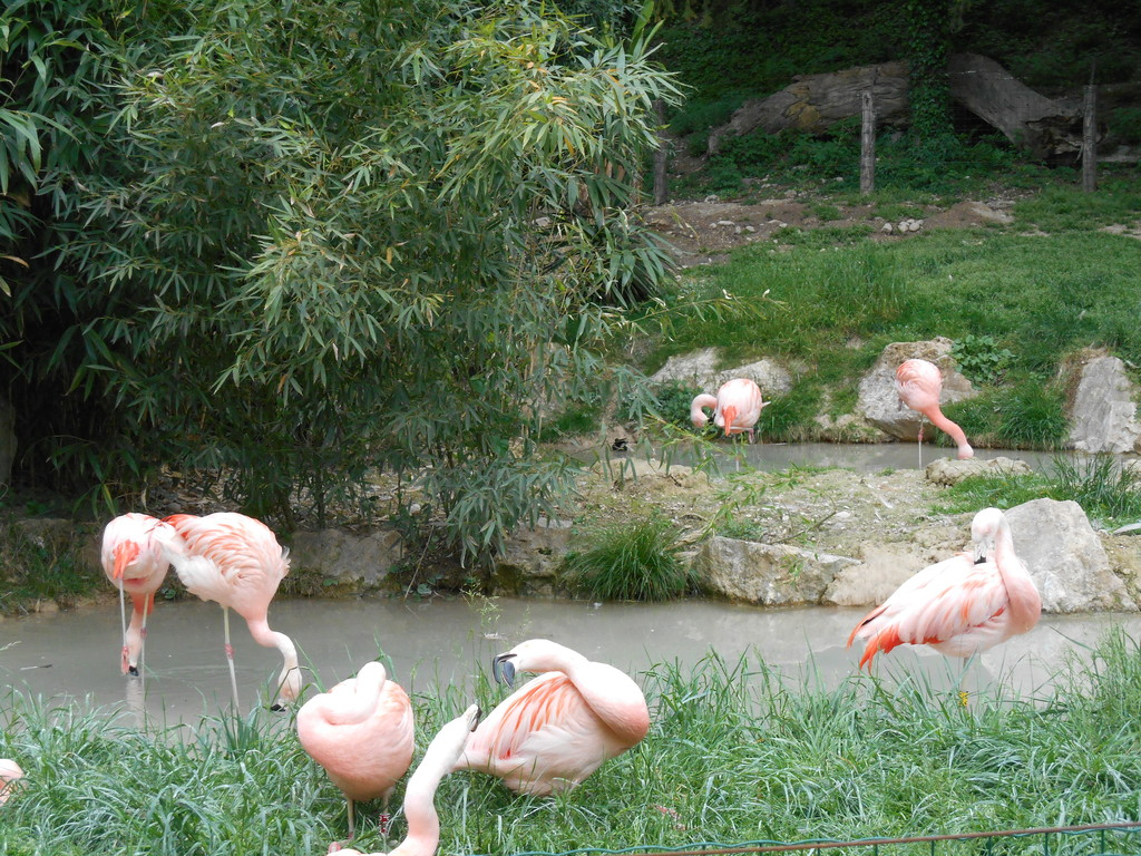 zoo-safari-italy-yes-6f714c0d0b993586785